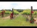 Vinařské město Valtice s velkým množstvím památek a krásnou přírodou