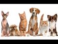 Veterinární péče pro domácí i hospodářská zvířata Semily, prevence, interní medicína