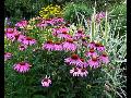Navrhneme a vytvoříme Vám bio zahradu v souladu s přírodou, kde porostou zdravé rostliny