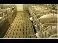 Stájové rošty z betonu Klatovy - dlouhá životnost materiálu.