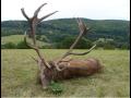 Lovecké zájezdy, výlety - lov zvěře v České republice
