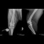 Ortopedie a traumatologie zvířat - veterinární diagnostika, chirurgická řešení