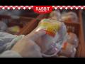 Řeznictví RABBIT po celé České republice