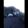 Listnaté a jehličnaté solitérní stromy - javor, cedr, borovice, smrk - prodej