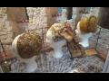 Mladoboleslavský hrad, expozice, výstavy Venkov v proměnách času, výstava Čepce, šátky, kroj