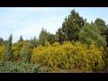 Výzkum a péče o krajinu, výzkum okrasného zahradnictví Praha, ochrana přírody, ekologie krajiny