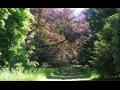 Palivové dřevo, výkup a prodej zvěřiny, poplatkový lov Vysoké Chvojno, arboretum, penzion