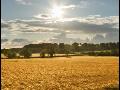 Farma, rostlinná konvenční výroba, ekologicky pěstované ovoce a myslivost