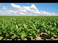 Rostlinná výroba, ekologicky pěstované ovoce