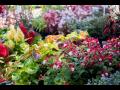 Prodej okrasných rostlin, keřů a příslušenství na zahradu –  keramika, ...
