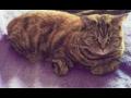 Veterinář pro psy, kočky, hospodářská zvířata - veterinární pohotovost