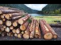 Lesnické práce, těžba, manipulace a přibližování dřevní hmoty