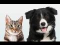 Veterina veterin�rn� ordinace o�kov�n� zv��at Jablonec nad Nisou