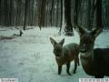 Hl�dac� kamery a fotopasti eshop