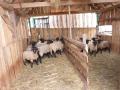Chov ovcí, agroturistika, pěstování plodin - prodej