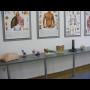 Maturitní obor zdravotnického lycea Vás připraví na studium vysoké zdravotnické školy