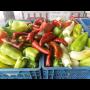 Čerstvá zelenina každý den přímo z pole – zelenina, papriky, rajčata, květák a brambory