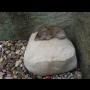 Účinná deratizace a likvidace hlodavců - hubíme potkany, myši, krysy i hraboše
