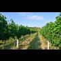 Ochutnávka vína přímo v našem sklepení Čejkovice