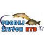 Celoroční prodej živých ryb - pstruhů, kaprů, amurů