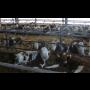 Živočišná výroba Staré Město u Moravské Třebové, výroba mléka, chov dojnic ve volném ustájení