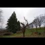 Údržba zahrad, ořez keřů, stromů, rizikové kácení - kompletní zahradnické služby