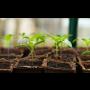 Prodej ovocných i okrasných stromů a keřů, trvalek, skalniček a letniček na Vaši zahradu