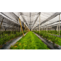 Borůvková farma - samosběr, prodej plodů, rostlin borůvek