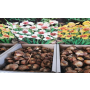 Sazenice a sadba pro Vaši zahradu – cibuloviny květin, bylinky