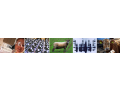 Veterinäranstalt, Tierkrankheiten, Veterinäruntersuchung, Tiersterben, Tschechische Republik