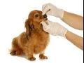 Gastroskopie, bronchoskopie, vyšetření žaludku u zvířat Ostrava