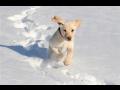 Ošetření psů, veterinární klinika