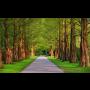 Údržba zeleně Karviná, sekání travnatých ploch, terénní úpravy, kácení rizikových stromů a dřevin