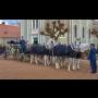 Pohřební ústav Dvůr Králové nad Labem, smuteční rozloučení, pohřby dobovým kočárem s koňmi