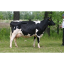 Živočišná výroba Meclov, chov skotu, chov dojnic, produkce mléka, chov prasat, produkce selat