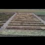 Výzkumný ústav rostlinné výroby Praha, genetika šlechtění rostlin, ochrana plodin a rostlin