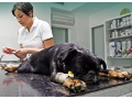 Veterinární klinika, zvěrolékař, čipování, očkování psů Ostrava