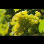 Vilavin gravitační vinařství, Dobré Pole u Mikulova, unikátní proces výroby vín