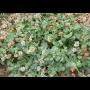 Prodej a výroba osiv, travin a pícnin, Troubsko
