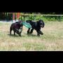 Psí školka Happy Dog Praha, výcvik psů, ubytování pejsků, venčení psů, individuální péče