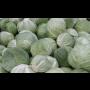 Krouhání zelí - prodej krouhaného zelí na nakládání, pěchování přímo do zeláků