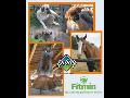 Nejlepší krmivo pro kočky - Fitmin