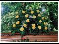 Pohřební služba Přibylák obstará zajištění pohřbu-pohřebnictví Zlín