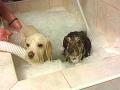 Kožní alergická onemocnění u psů