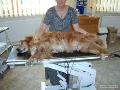 EKG zvířat – veterina Náchod Červený Kostelec Dvůr Králové