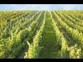Vinařství jižní Morava