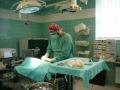 Chemoterapie, onkologie, neurologie pro psy, Vysočina