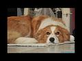 Praha mezinárodní výstava psů