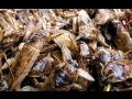 Dezinsekce mravenci mouchy blechy čmelíci vši Hradec Pardubice