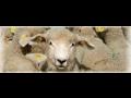Veterina, chov ovc�, o�kov�n� zv��at, prodej krmiv Zl�n